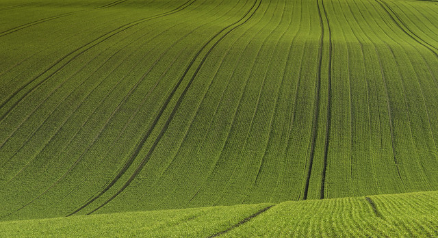 Field of Lines - South Downs Way Lewes in Sussex