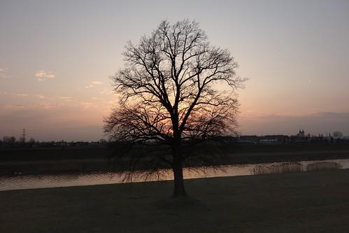 drzewo pojedynczedrzewo terenzalewowy wyspabolko opole tree singletree floodplain bolkoisland opoletree zachód sunset park niebo sky kanałulgi wyspa