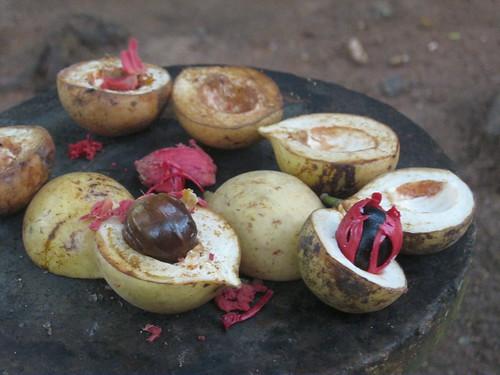 Spice Garden Muscade et macis | by sweetpeasue