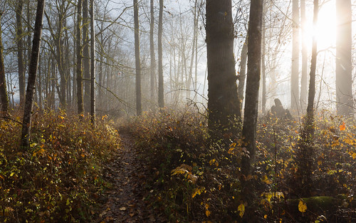 forest trees nature fog foggy sun light path trail washingtonstate pacificnorthwest carnation canoneos5dmarkiii canonef2470mmf28lusm sunrise morning johnwestrock wallpaper background