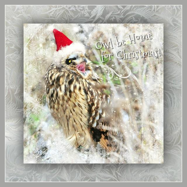 owl be home for Christmas . . .