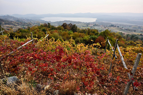 lago lake viverone piemonte zimone veduta view vigna vigne vigneto vite viti vigneti vineyard vineyards uva grapes autunno autumn filari paesaggio landscape colori colors