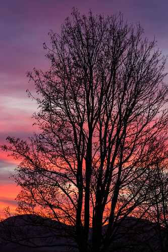 tree ngc sunrise dslr colours morning