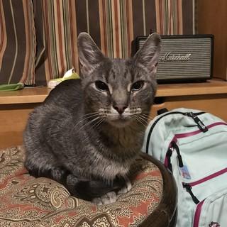 Diego the Ditch Kitty   by genibee