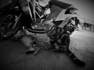 fisheye cats