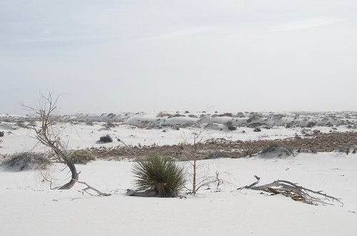 White Sands dead tree and cactus | by Pierre Yeremian