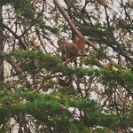 Wiewiórki są wszędzie
