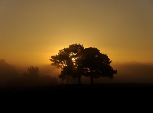 walton heath mist surrey sunrise sun autumn fall morning early england english britain british dawn