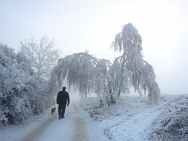 In the winter fairy tale
