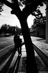 Stellenbosch Street