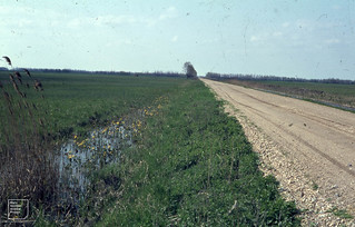 Puszta drained for crops Laltha Dyke. Neusiedl. 1965