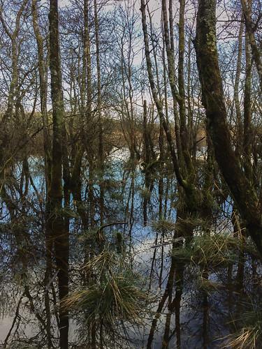 landscape ireland moss reflections water