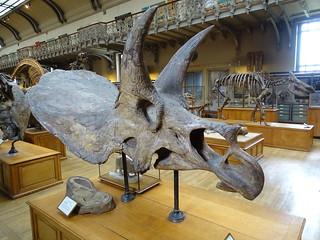 Galerie de Paléontologie et d'Anatomie comparée Paris | by thomasdr11