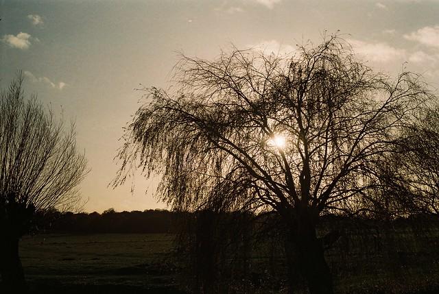 35mm film Richmond Park Nov
