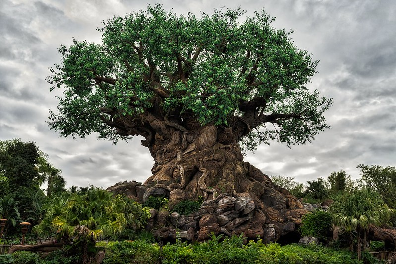 CC image The Tree of Life by Geoff Livingston at Flickr