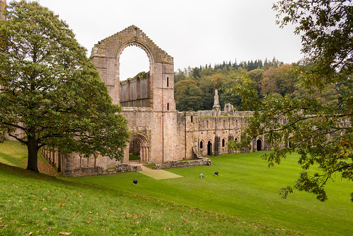 fountainsabbey nave abbey church monastery cistercian ruins remains building architecture ripon yorkshire cellarium tree grass woodland nationaltrust