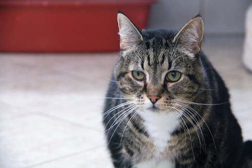 Oscar - 14 year old neutered male | by carescatshelter