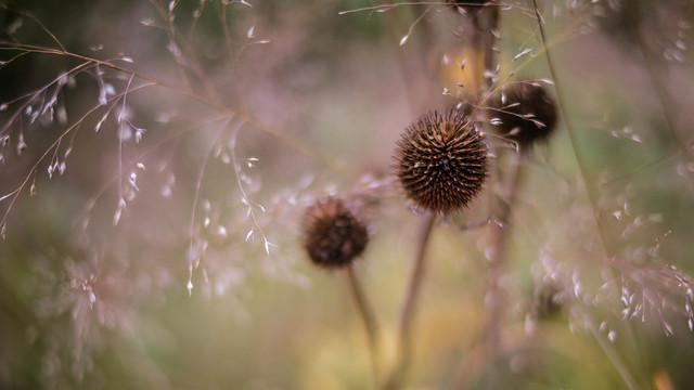 Prickly Delicacy