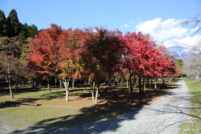 Village of maple