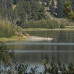 Cormorants sunning on Emma Matilda Lake's shore