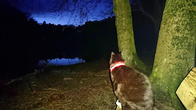 Cat On Evening Lake