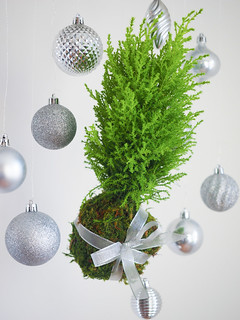 Christmas Kokedama Photo courtesy Lynne Tischler, AAF, CPFD, PFCI, with Keith Osborne and Jessie Thompson of Your Enchanted Florist in St. Paul, Minnesota. https://yourenchantedflorist.net/ | by Flower Factor