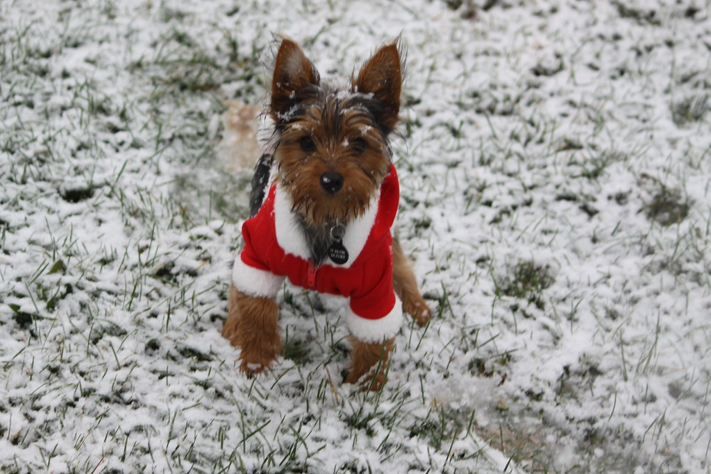 How To Keep Dogs Safe During the Winter Season