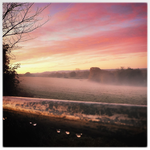 elstead fields mist morningwalk sunrise england unitedkingdom gb
