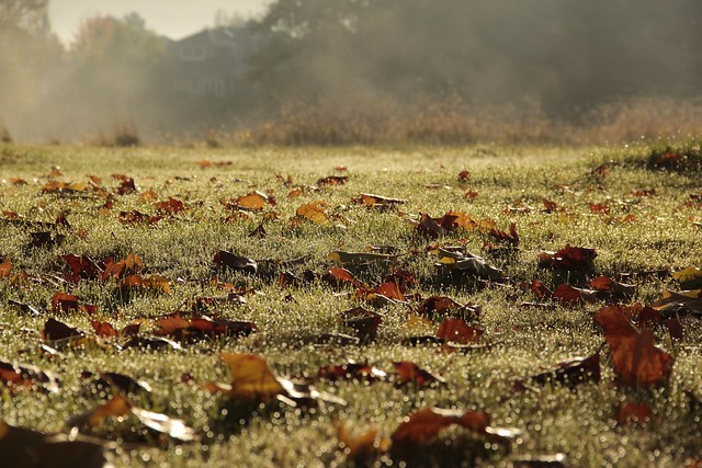 Morning fog just lifting... leaving perls of dew on the meadow...