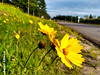 Flores na beira da estrada