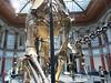 Giraffatitan Brancai v Museum für Naturkunde, foto: Petr Nejedlý