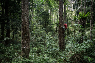 GCS-Tenure Project in Lampung   by CIFOR