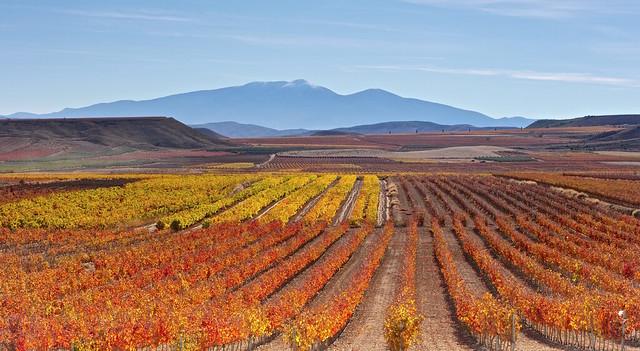 El valle de las Viñas