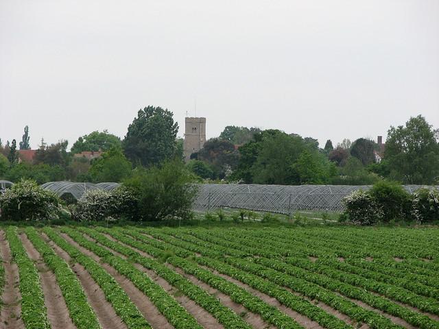 Farmland near Goldhanger