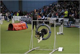 Indoor Agility, world Dog Show 2017 Leipzig 2   by HW062