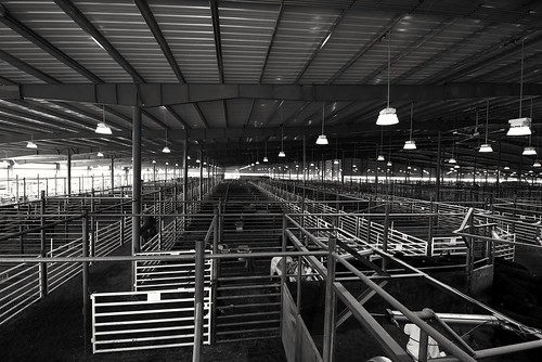 Bluegrass Stockyards gates, pens , and corrals in black and white | by A  Train