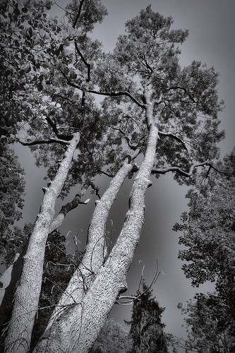 trees | by bwstock