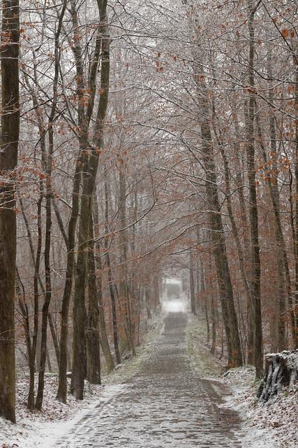 Une des rares drèves pavées de la forêt de Soignes, sous la neige.