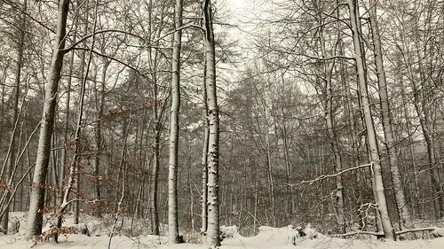 snow trees landscape autumnleaves treetrunk winter nature flickrelite flickriver pov