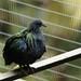The beautiful plumage!!