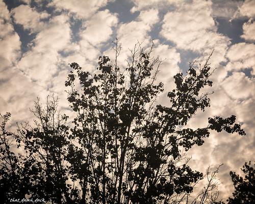 clouds nature leaves dawn sunrise