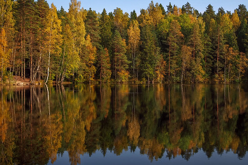 autumn colors colorful pond forest tree trees pine birch serene peaceful reflection yellow green leaves landscape sunny sunshine luukki espoo finland