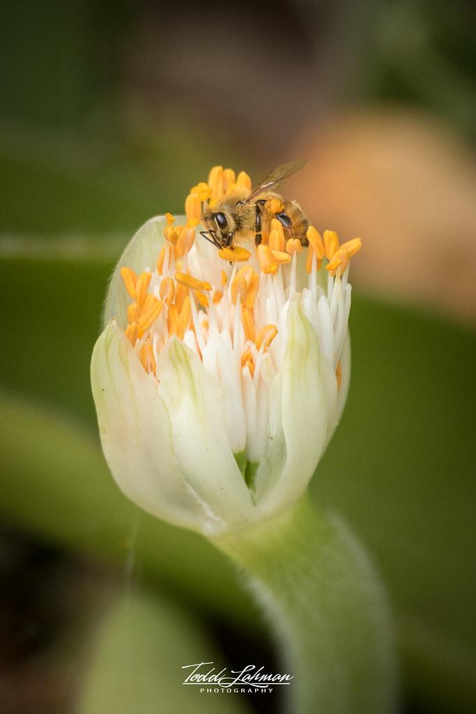 Bee-utiful Day!