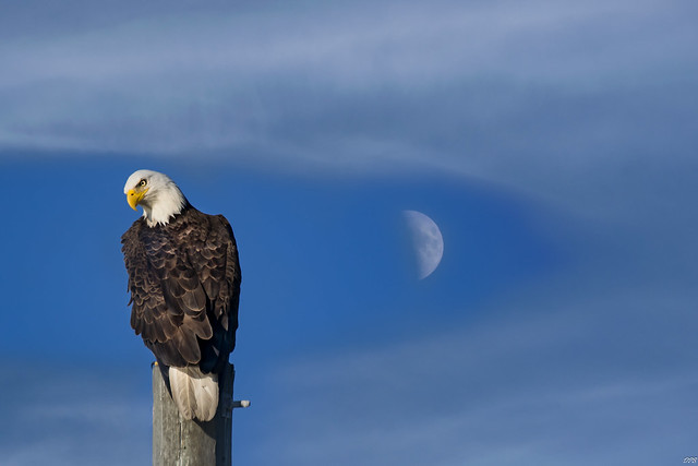 'The Eagle has Landed'