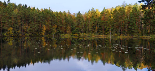 forest pond autumn colors tree trees pine peaceful reflection leaves landscape light leaf water yellow green luukki espoo finland