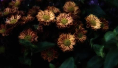 Flowers. | by gacebace1