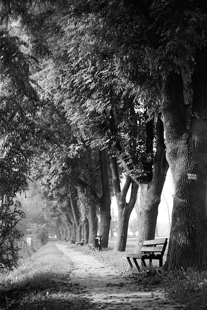 Chodnik przy Podgórskiej / Path along Podgórska street