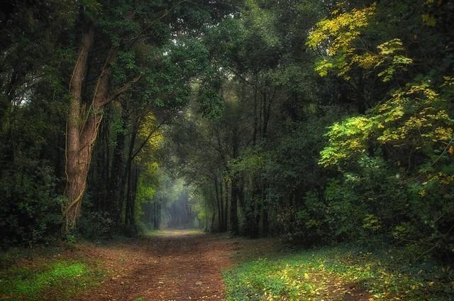 il bosco.....