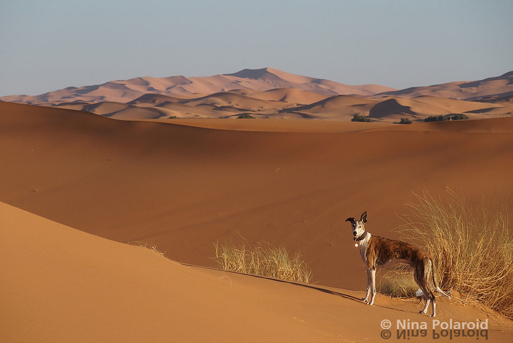 In the Desert You Can't Remember Your Name | Erg Chebbi
