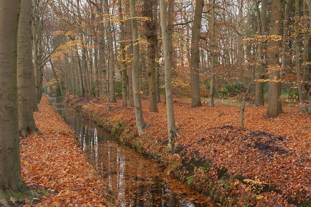 Herfst - Utrechtse Heuvelrug